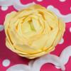 FMM Utstickare The Easiest Ranunculus Ever